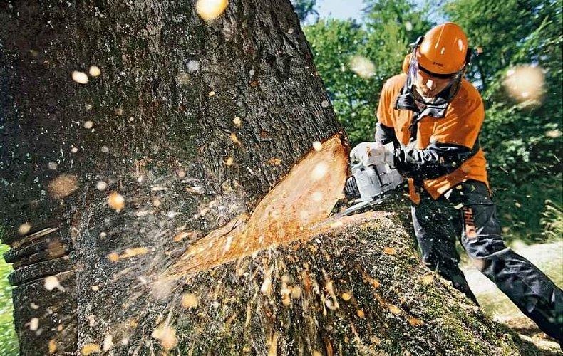 Туляки обеспокоены вырубкой деревьев по берегам Упы