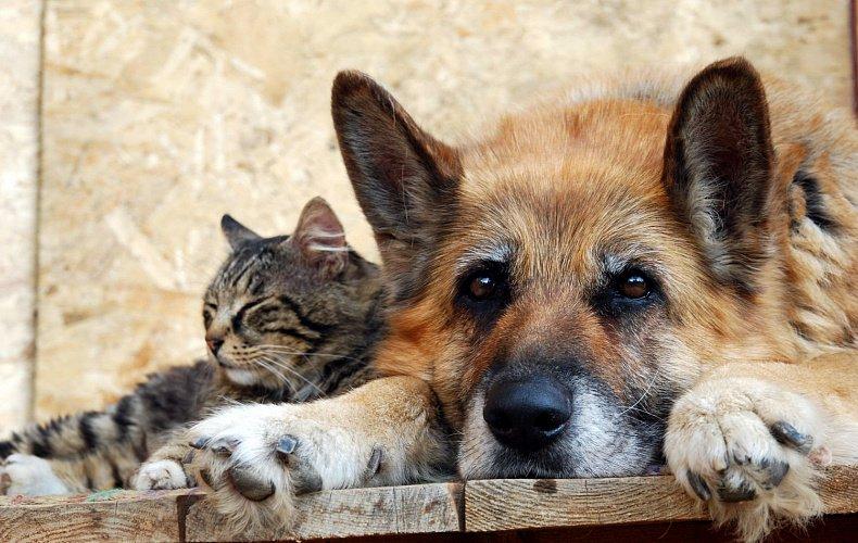 Туляков просят помочь с кормом для бездомных животных