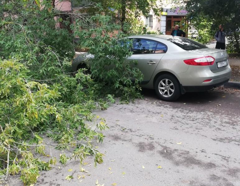 Движение на улице Свободы перекрыто из-за рухнувшего дерева