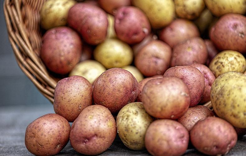 Туляк вынес из чужого сарая около 200 килограммов картофеля