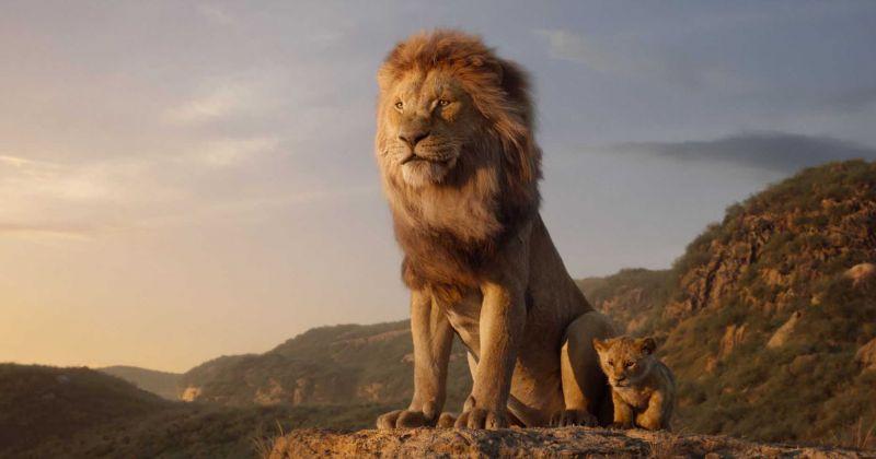 Сиквел «Короля Льва» находится в разработке. Его снимет режиссер «Лунного света»