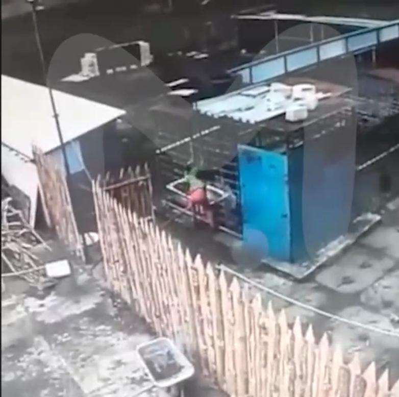 Купленный у тульского зоопарка медведь в Курске напал на женщину