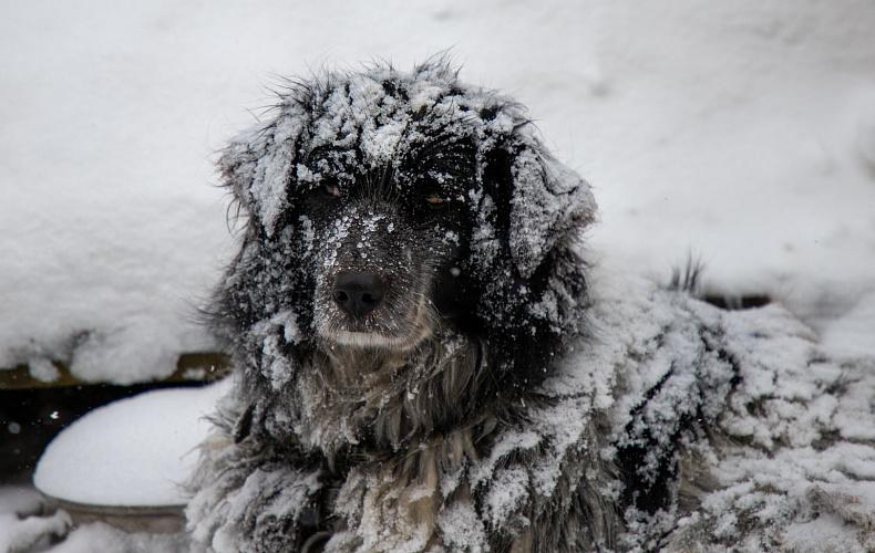 Синоптики рассказали, когда в ЦФО пойдет снег